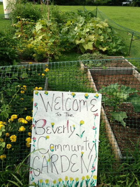 Environmental beverly city for American garden association